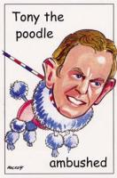 6 Tony the poodle.